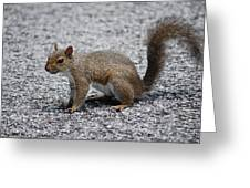 Squirrel On A Road Greeting Card