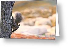 Squirrel Sitting On The Tree  Greeting Card