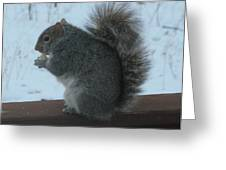 Squirrel Snack Greeting Card
