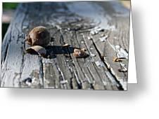 Squirrel Trash Greeting Card