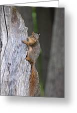 Squirrel's Tree Greeting Card by Linda Larson