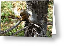 Squirrling Away Greeting Card
