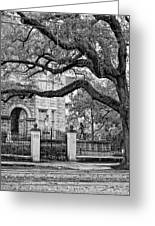 St. Charles Ave. Monochrome Greeting Card
