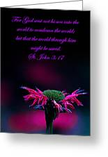 St. John 3  17  And Bee Balm Greeting Card