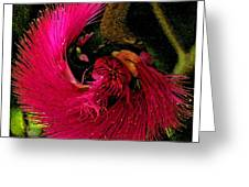St Kitts Flora Greeting Card