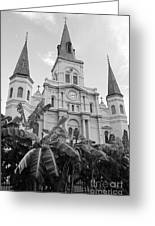 St Louis Cathedral Rising Above Palms Jackson Square French Quarter New Orleans Black And White Greeting Card