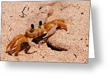 St. Lucia Crab On Beach Greeting Card