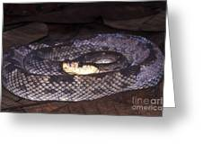 St. Lucia Pit Viper Greeting Card