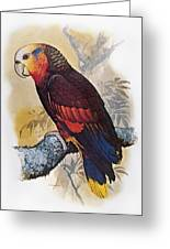 St Vincent Amazon Parrot Greeting Card