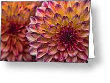 Stacked Dahlias Greeting Card