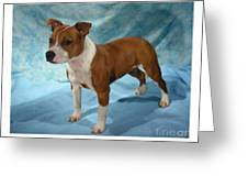 Staffordshire Bull Terrier Thank You FROM THE DOG 8 x 10 Picture//10x8 Print