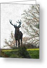 Stag On Hillside Greeting Card