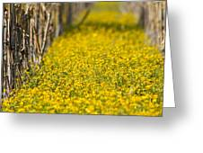 Stalks And Sunshine Greeting Card