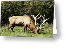 Stand Alone Elk Greeting Card