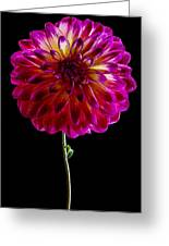Stand Up Dahlia Greeting Card