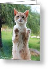 Standing Cat Greeting Card