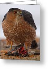 Standing Guard - Cooper's Hawk Greeting Card