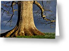 Standing Strong Oak Tree And Storm Clouds Greeting Card