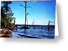 Standing Tall Goose Creek State Park Greeting Card by Joan Meyland