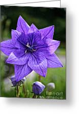 Star Balloon Flower Greeting Card