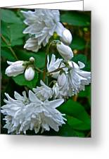 Star Cluster Flowers Greeting Card