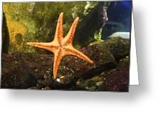 Star Fish Greeting Card