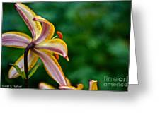 Star Lily Greeting Card