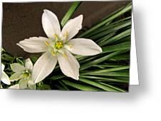 Star Of Bethleham Greeting Card