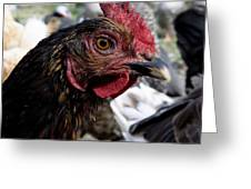 Star Of The Hen Party Greeting Card