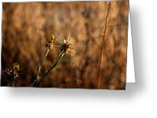 Star Thistle Greeting Card