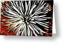 Starburst Greeting Card by Yvonne Scott