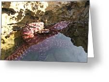 Starfish Ca Tidepools Greeting Card
