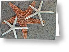 Starfish Three Greeting Card by Sandi OReilly