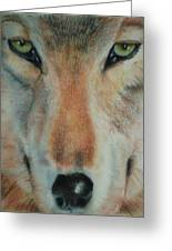Staring Contest Greeting Card by Joanna Gates