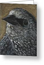 Starling Study Greeting Card