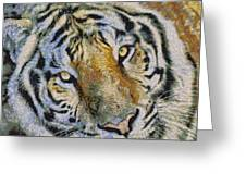 Starry Tiger Greeting Card