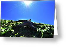 Stars From Below Greeting Card