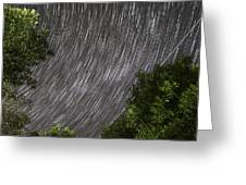 Startrails Above Tree Greeting Card by Cristian Mihaila