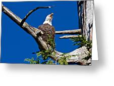 Squawking Alaskan Eagle Greeting Card