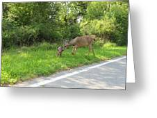 Stay Off The Road Bambi Greeting Card