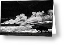 Steaming Bison Greeting Card