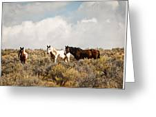 Steens Wild Horses Greeting Card