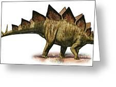 Stegosaurus Armatus, A Prehistoric Era Greeting Card