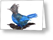 Steller S Blue Jay Greeting Card