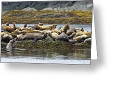 Stellers Sea Lion Eumetopias Jubatus Greeting Card