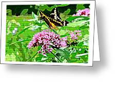 Stencilled Butterfly Greeting Card