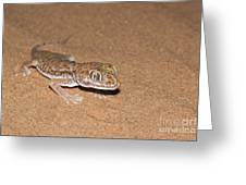 Stenodactylus Petrii Or Dune Gecko Greeting Card