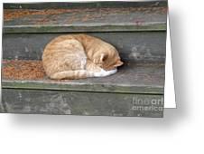 Step Sleeper Greeting Card