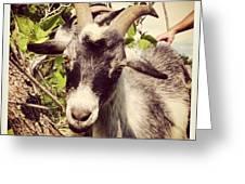 Steve My Goat Greeting Card