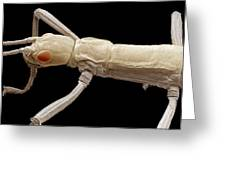 Stick Insect, Sem Greeting Card by Steve Gschmeissner